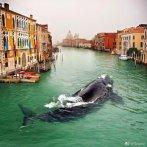 威尼斯运河中出现水母