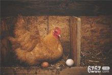 梦见鸡下蛋什么征兆 梦见鸡下蛋周公解梦