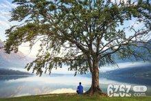 梦见大树是什么意思 梦见大树周公解梦